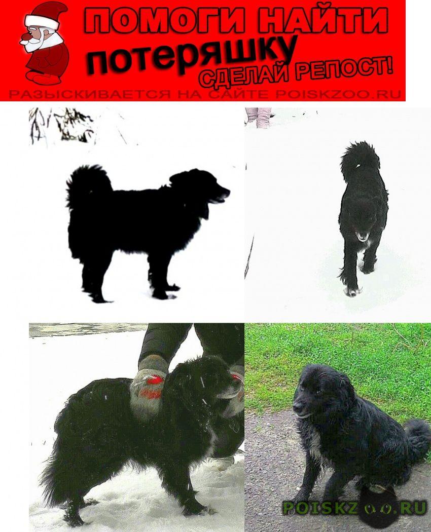 Пропала собака кобель бим г.Ростов-на-Дону