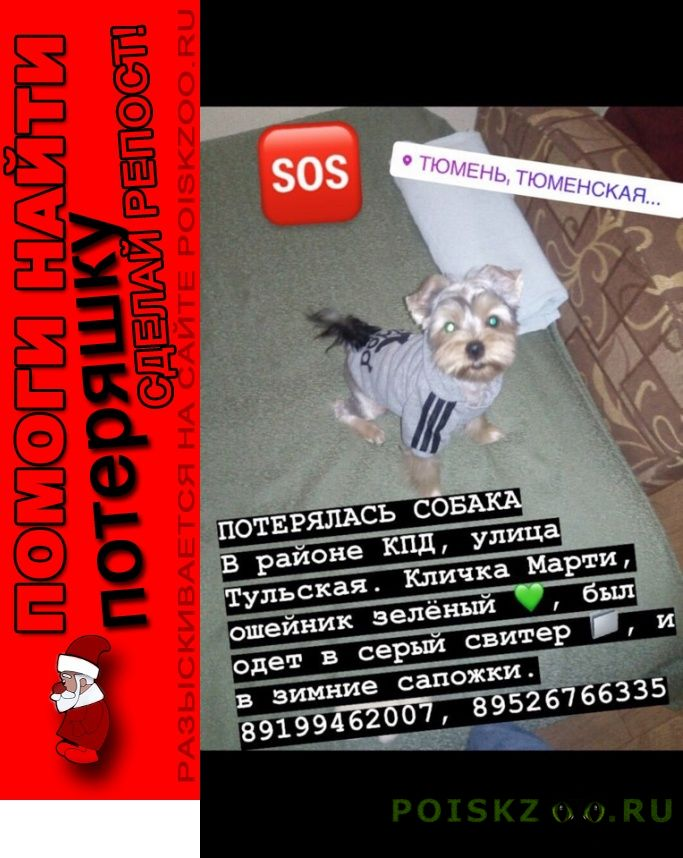 Пропала собака кобель верните собаку в семью г.Тюмень