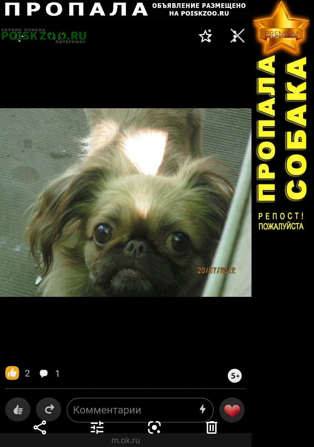Пропала собака Ростов-на-Дону