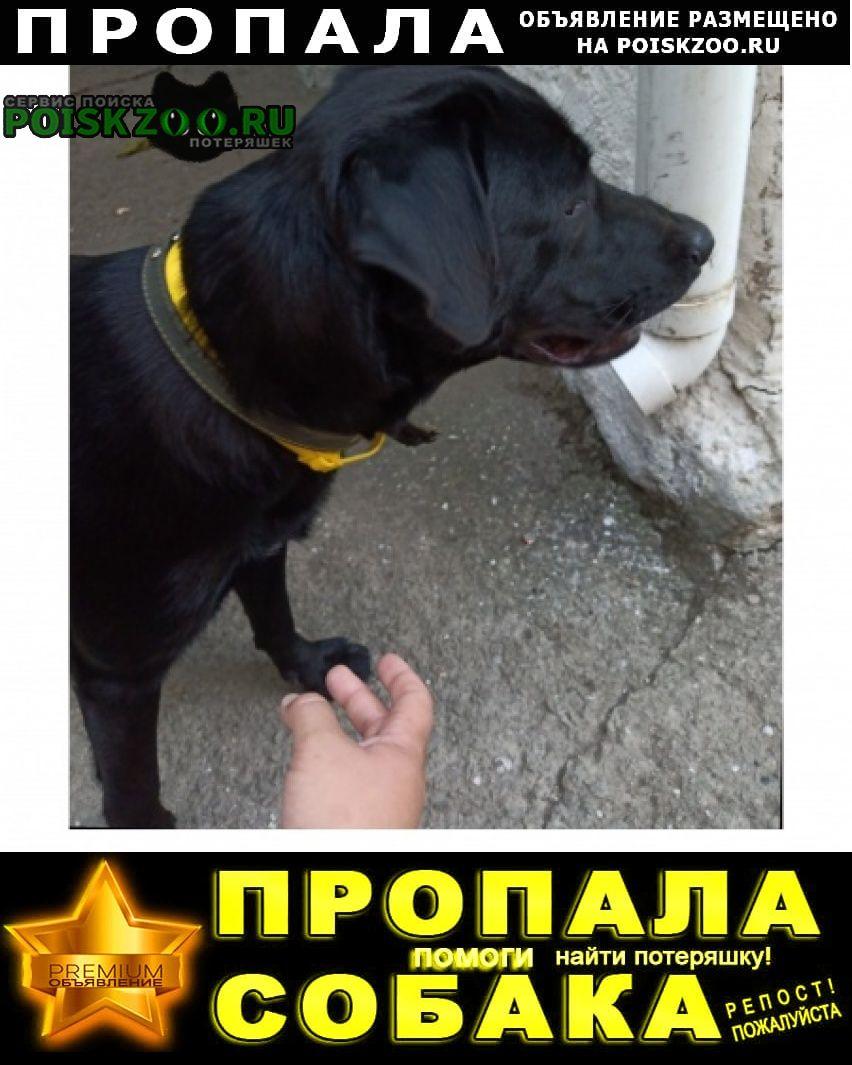 Пропала собака друг семьи Ялта