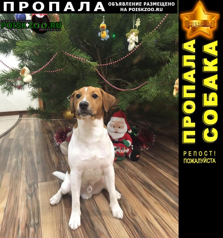 Пропала собака вознаграждение гарантируем Анапа