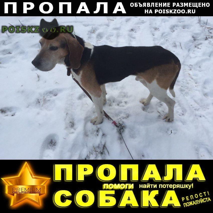 Пропала собака кобель г.Серпухов
