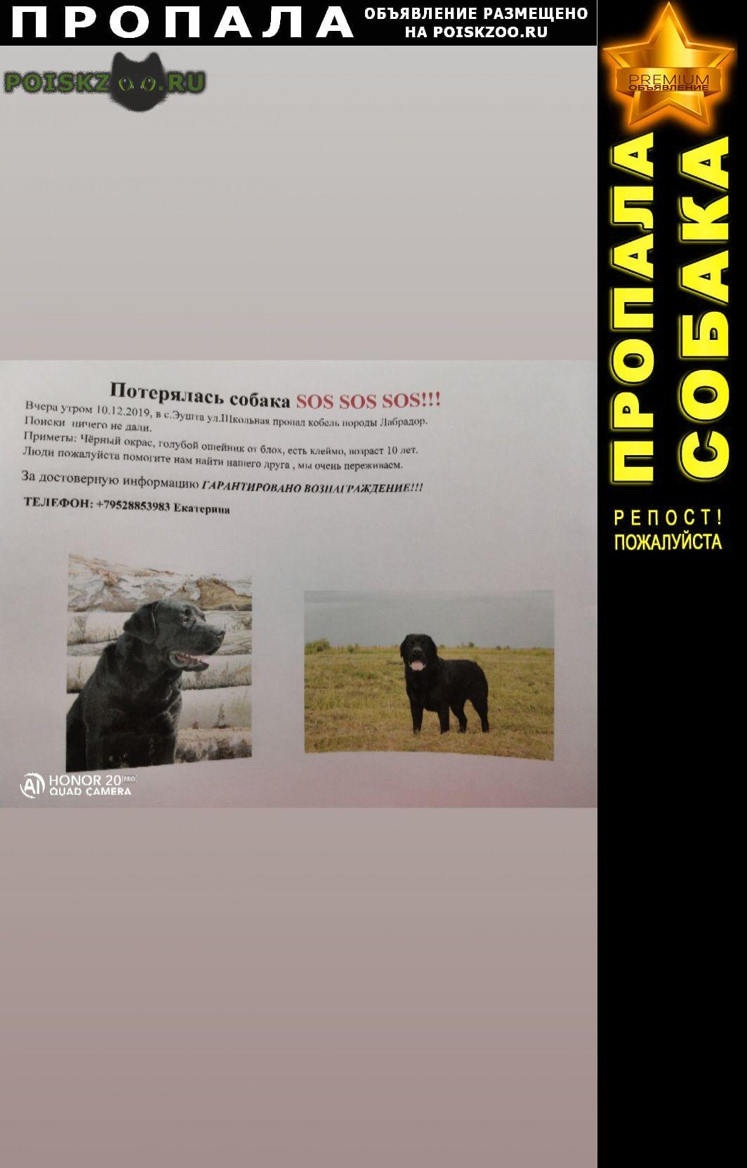 Пропала собака кобель лабрадор. г.Томск