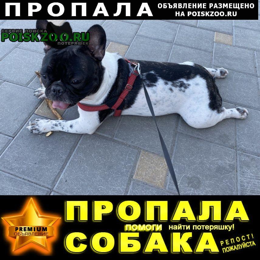 Пропала собака помогите найти Батайск