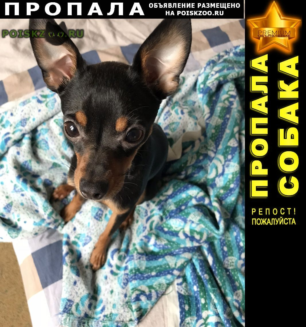 Пропала собака кобель розыск Анапа