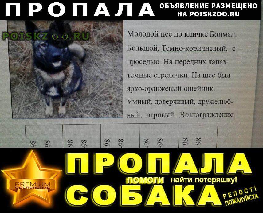 Пропала собака кобель Аксай (Ростовская обл.)
