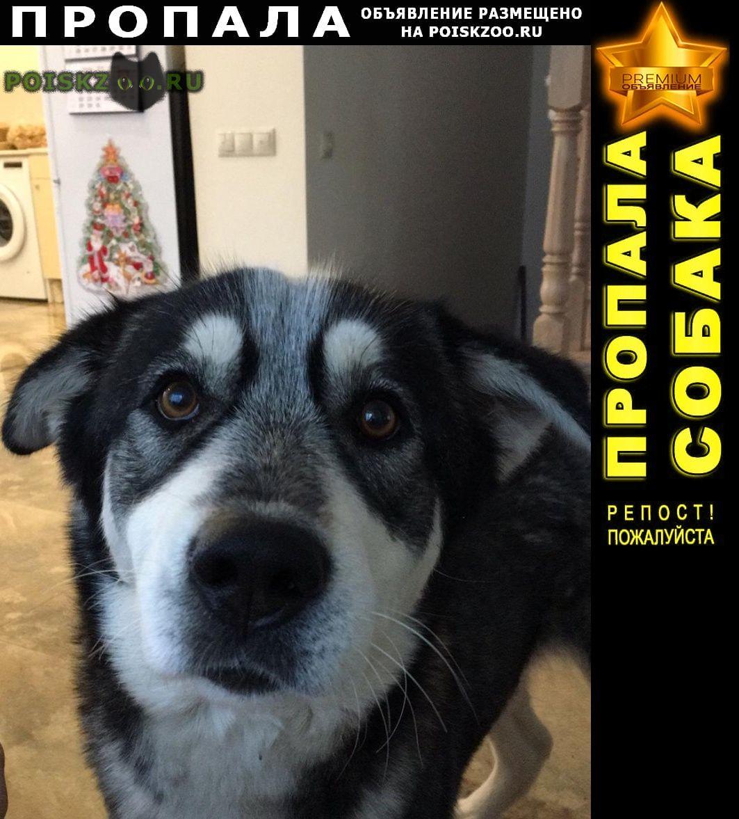 Пропала собака Видное