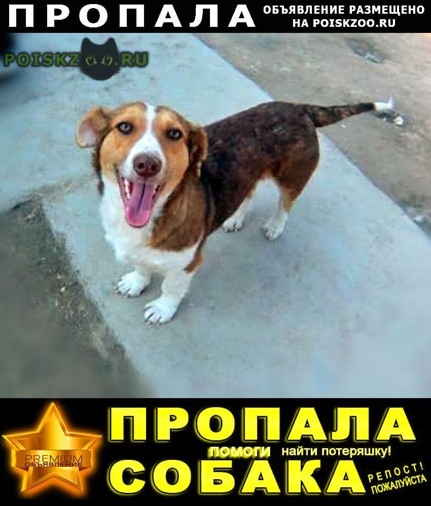 Пропала собака тася г.Москва