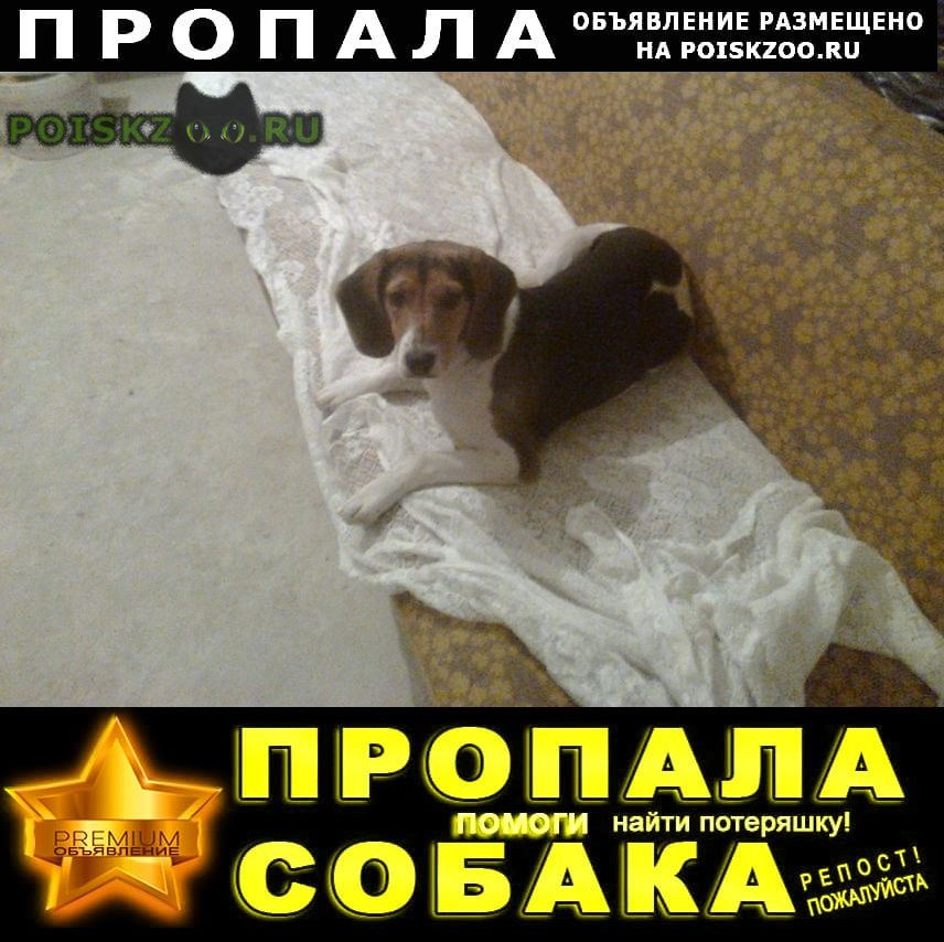 Пропала собака г.Курск