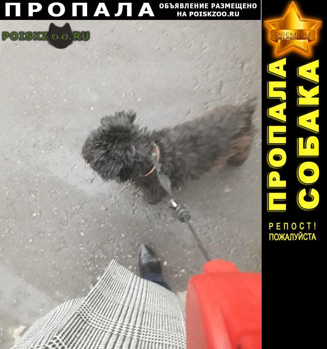 Пропала собака кобель г.Пенза