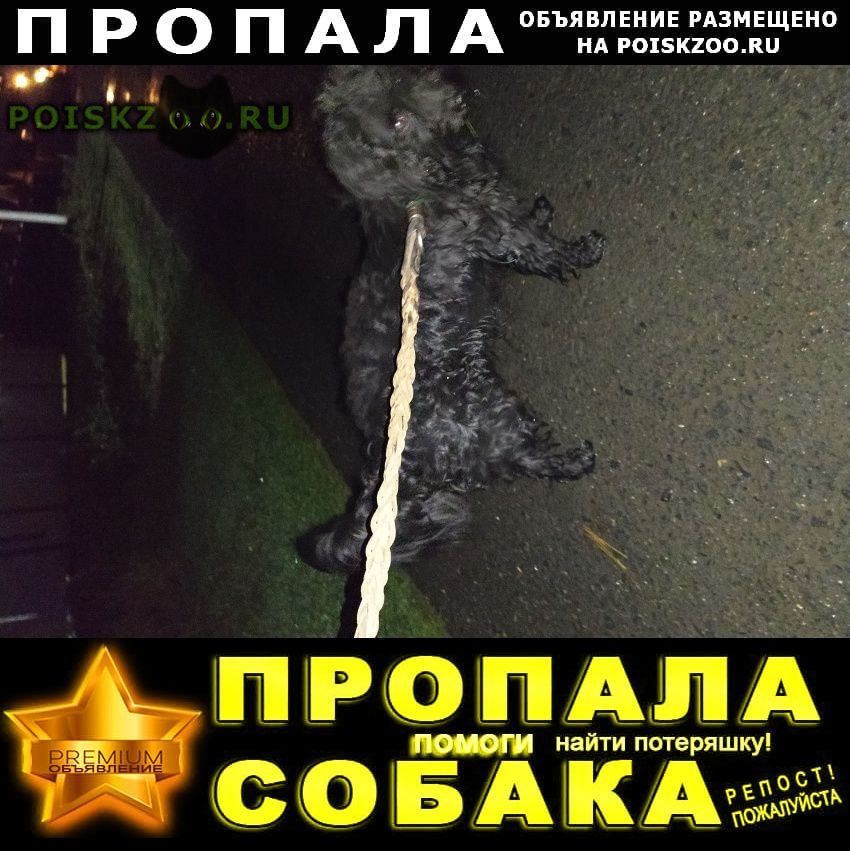 Пропала собака кобель район мариупольского шоссе г.Таганрог