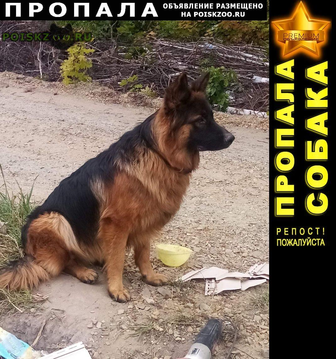Пропала собака кобель немецкой овчарки Пенза
