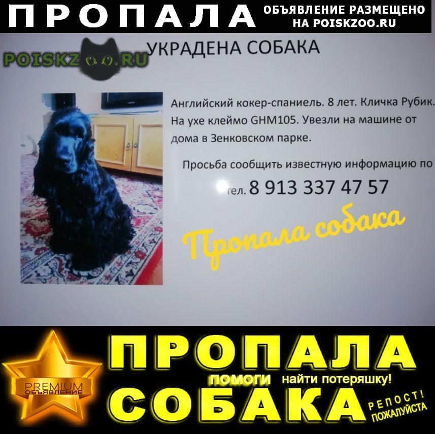 Пропала собака кобель г.Прокопьевск