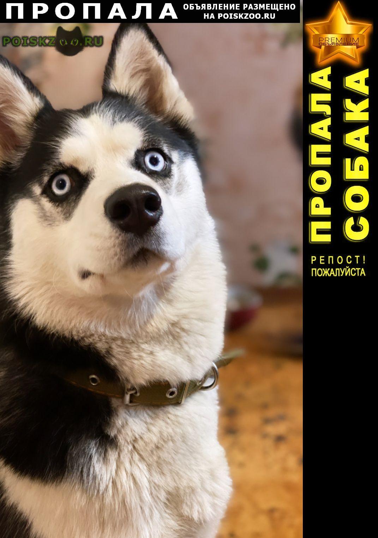 Пропала собака Пустошка