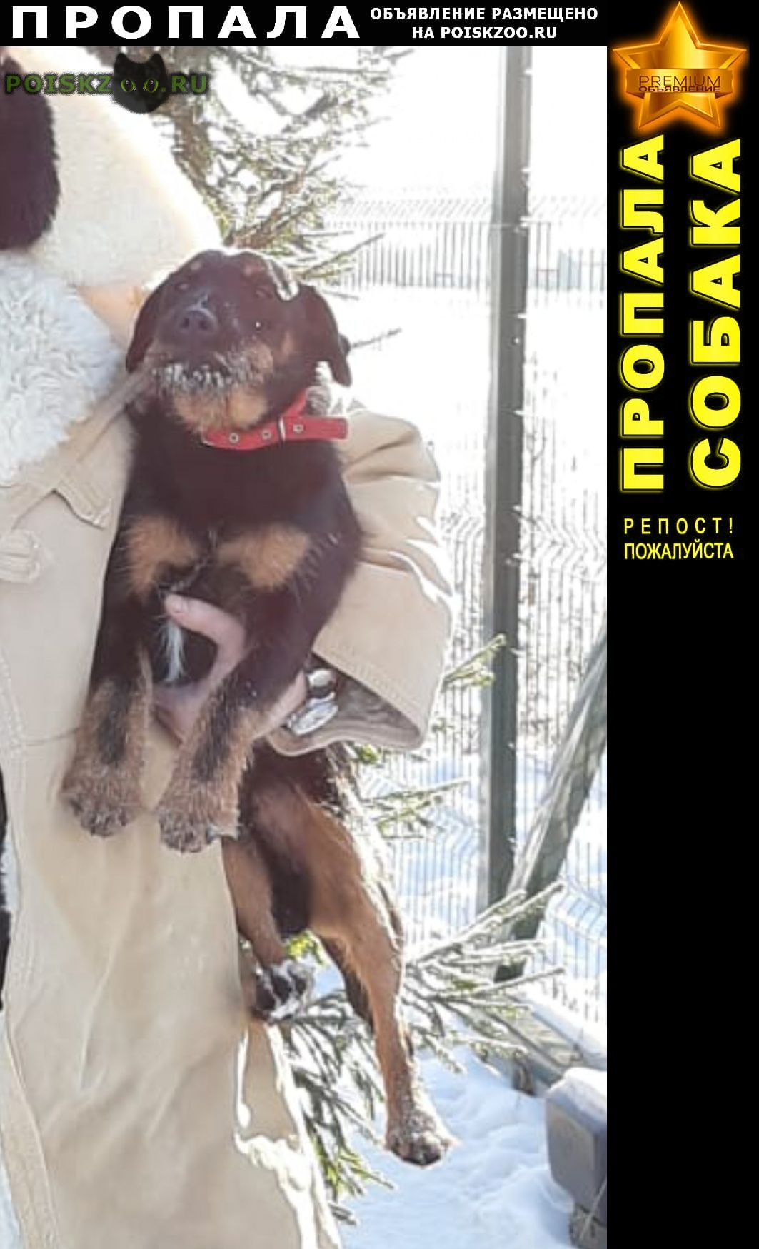 Пропала собака кобель г.Куровское