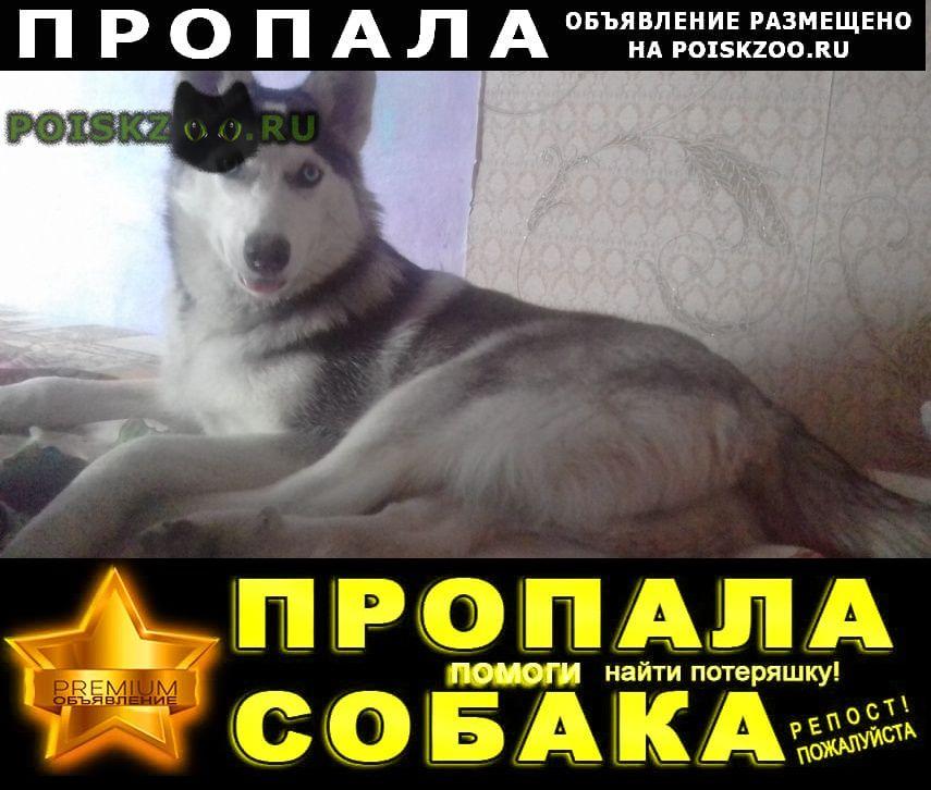 Пропала собака убежала сибирская хаска Томск
