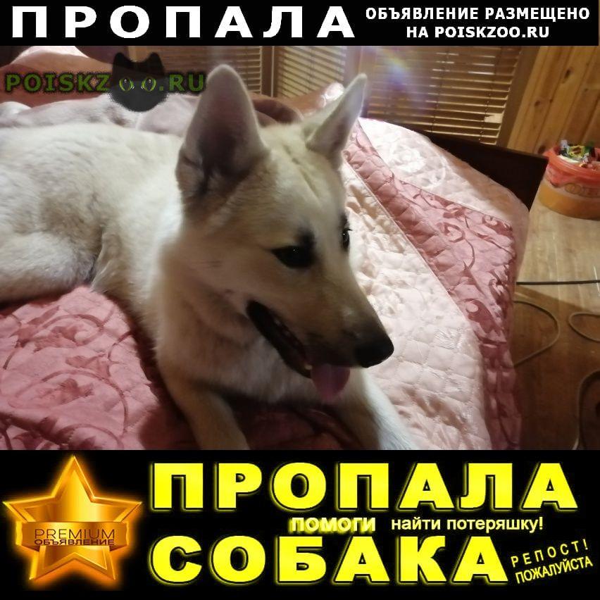 Пропала собака кобель пахож на волка Истра