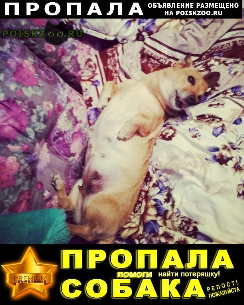 Пропала собака если кто видел, или приютил, отзовитесь Хабаровск