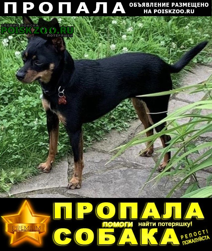 Пропала собака маленькая г.Загорянский