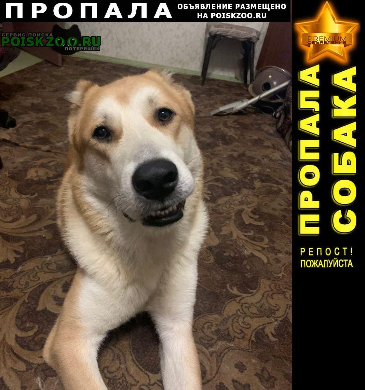 Пропала собака кобель прошу помочь найти г.Рыбинск