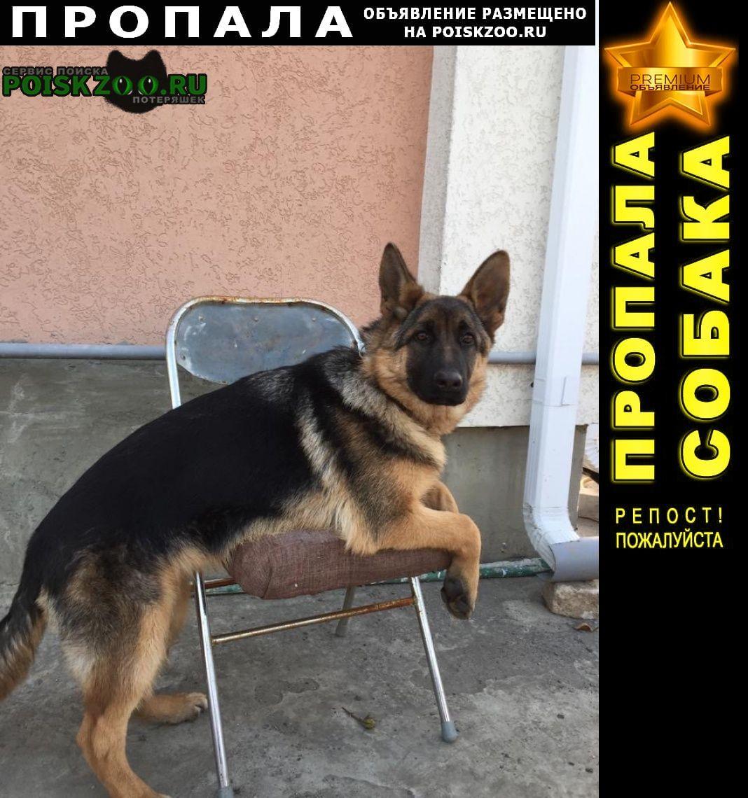 Пропала собака г.Семилуки