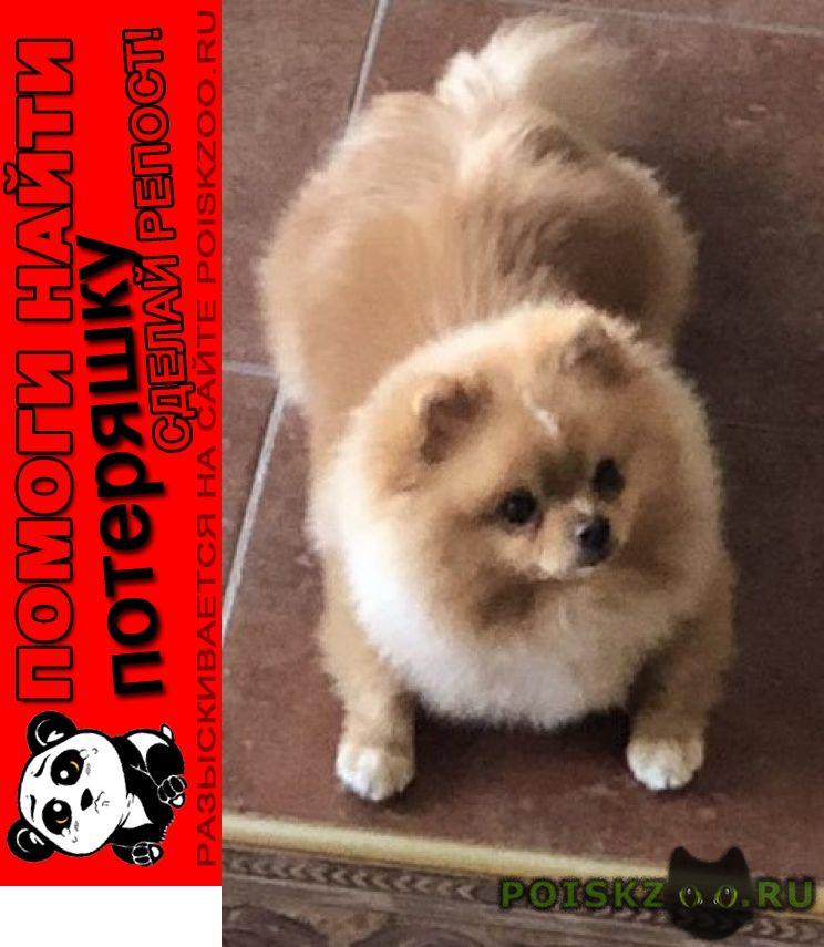 Пропала собака кобель срочно, помогите за вознаграждение г.Можайск