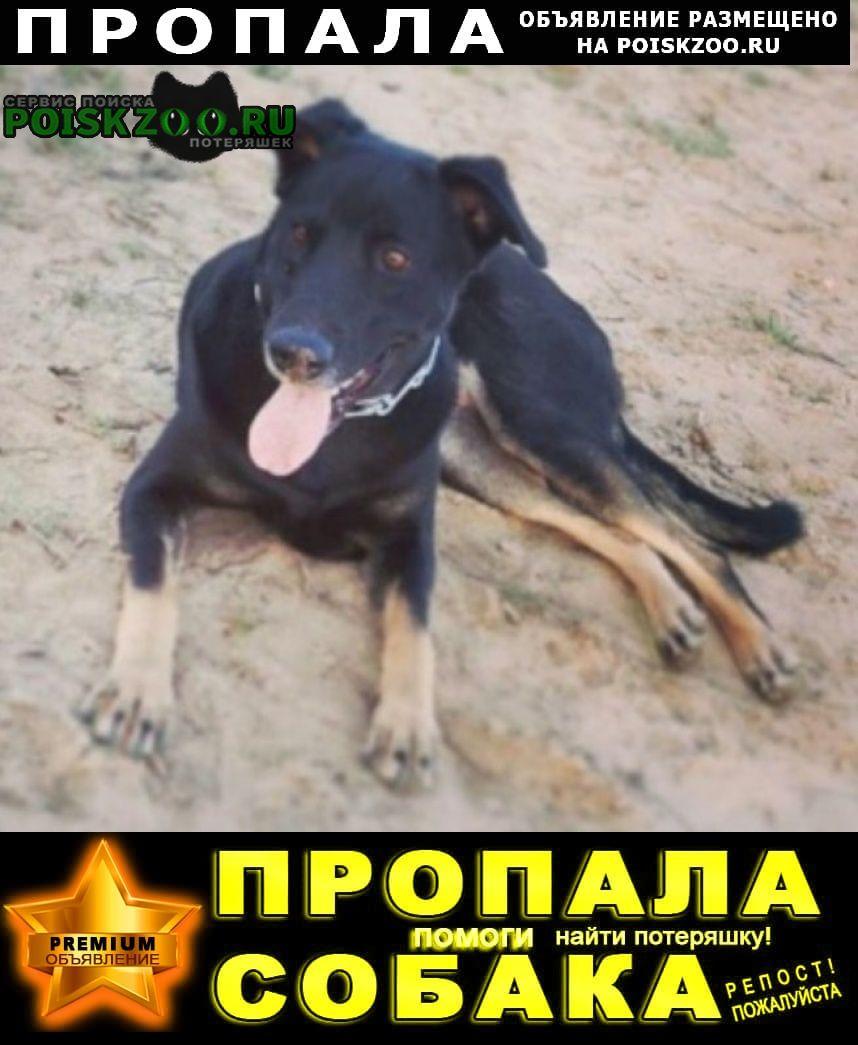 Пропала собака с. чанки Коломна