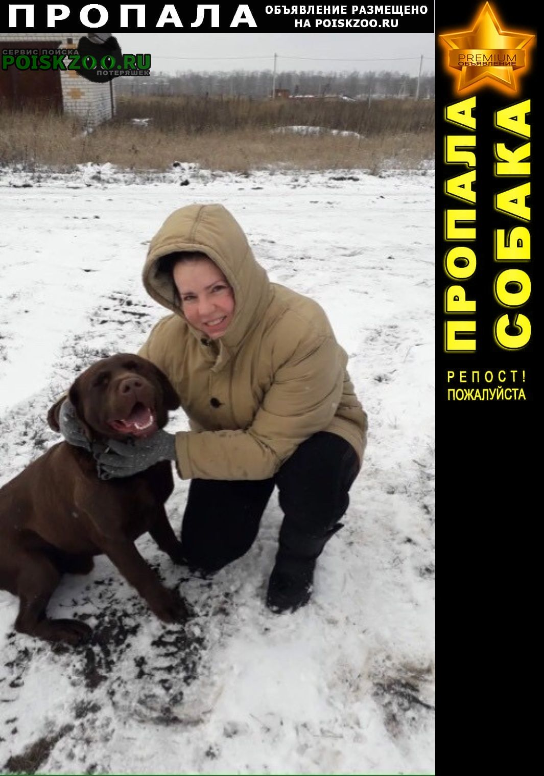 Пропала собака кобель лабрадор шоколад г.Курск