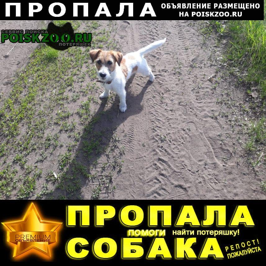 Пропала собака г.Ульяновск
