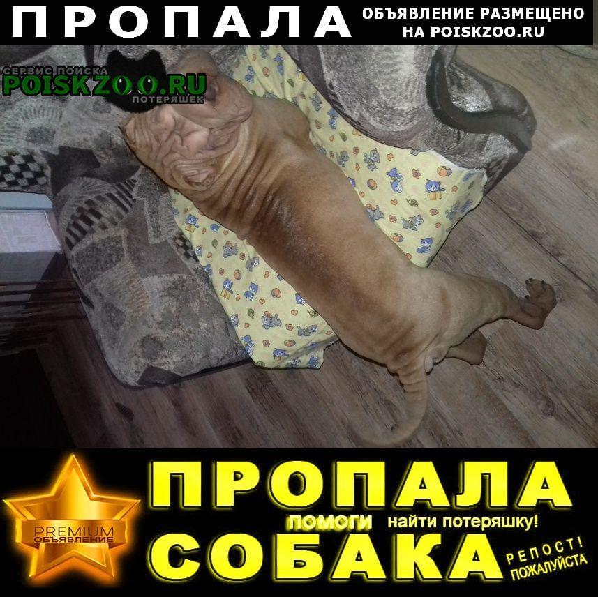 Пропала собака шарпей окрас рыжий, карие глазки, ошейни г.Нижний Новгород