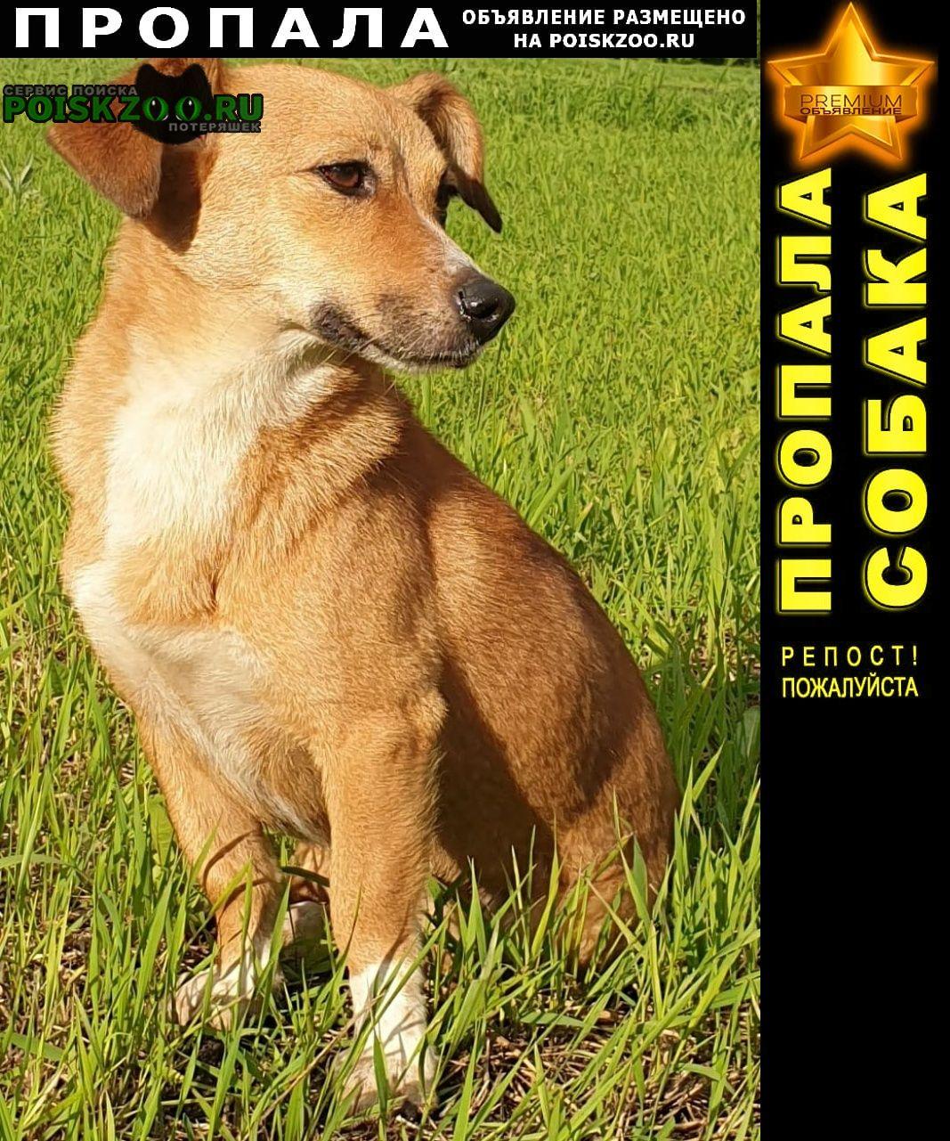 Пропала собака помогите найти собаку  г.Воронеж