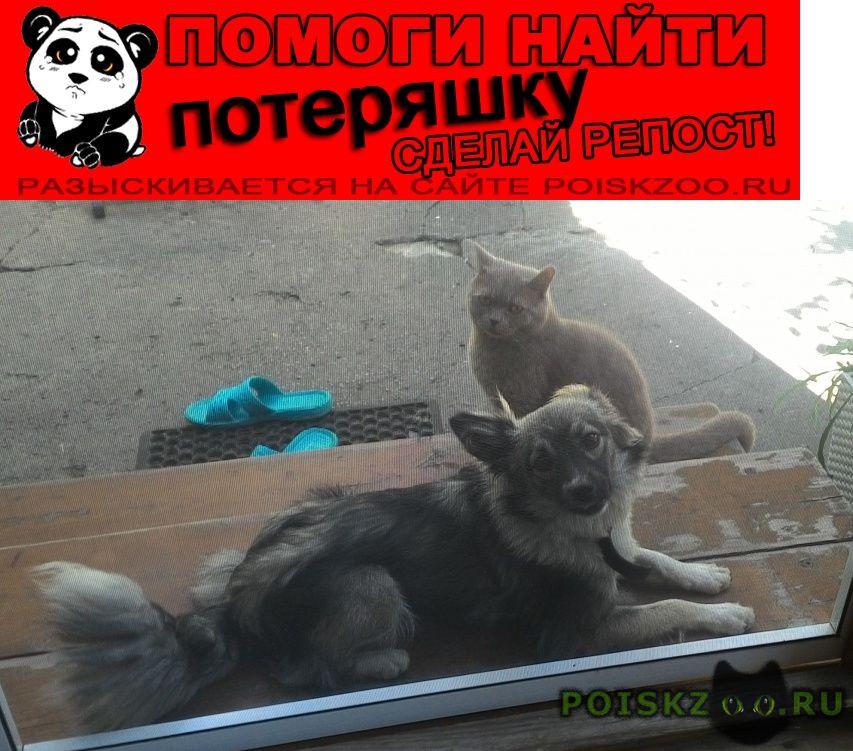 Пропала собака потерялась сонечка г.Ростов-на-Дону