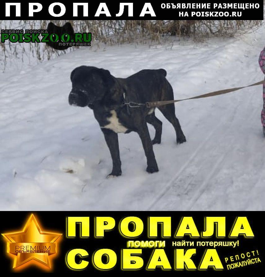 Пропала собака чуть выше колена Заинск