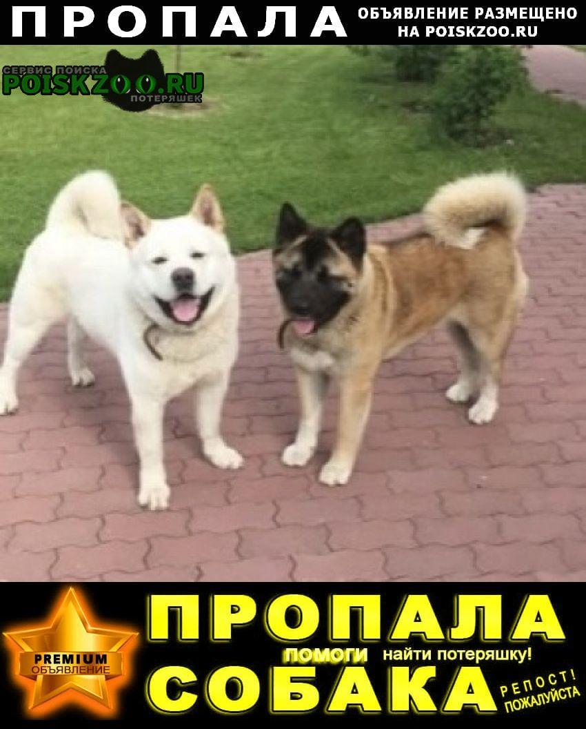 Правдинский Пропала собака кобель и собаки