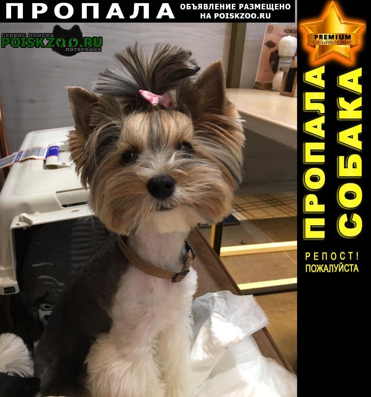Пропала собака станица шапсугская Абинск