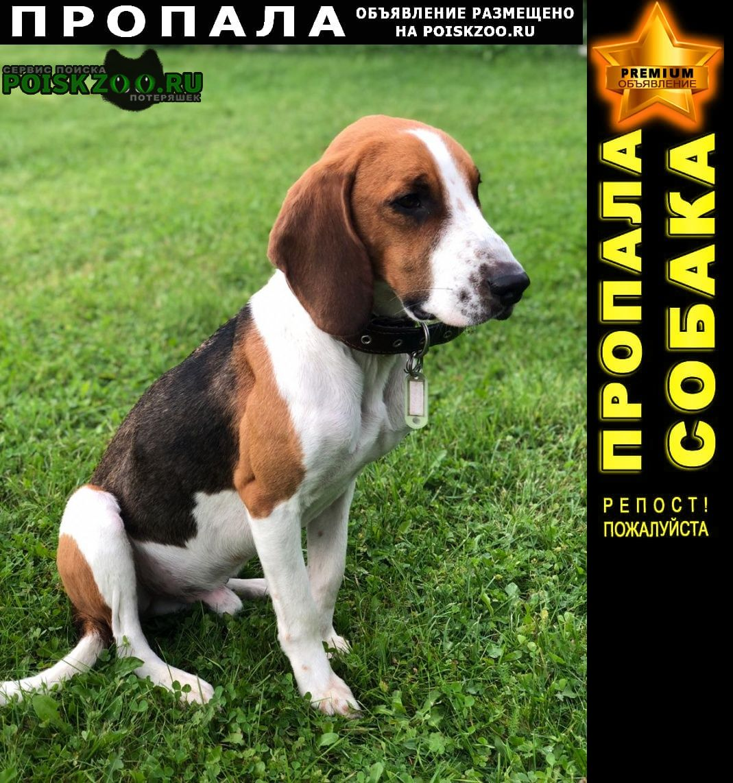 Пропала собака кобель Переславль-Залесский