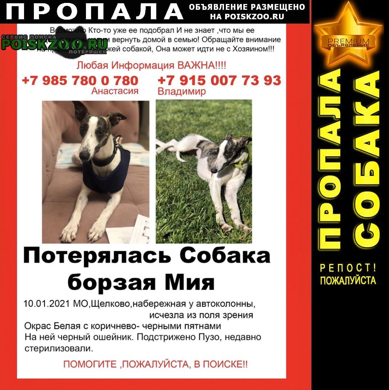Пропала собака борзая уиппет мия Щелково