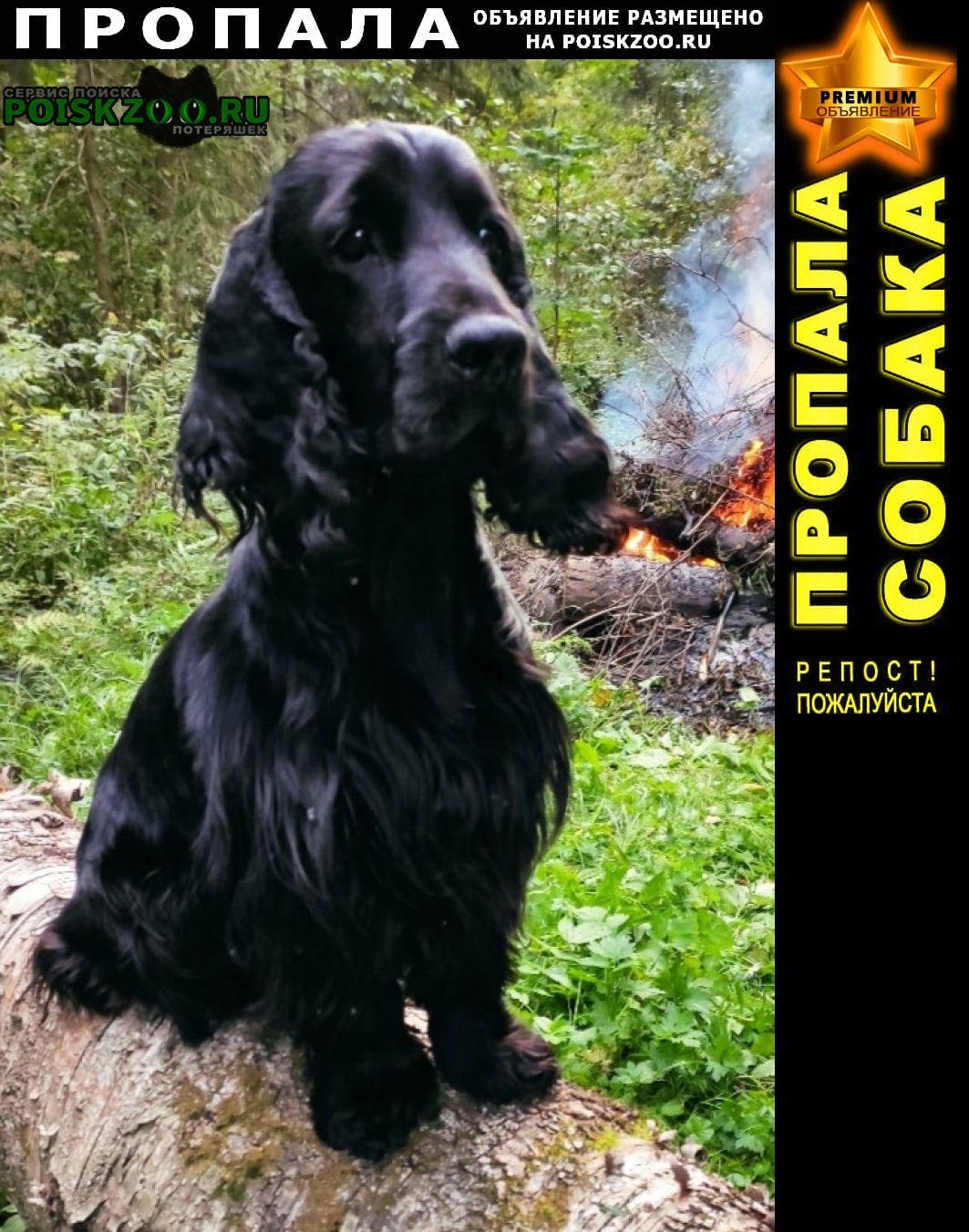 Пропала собака кокер спаниель Солнечногорск