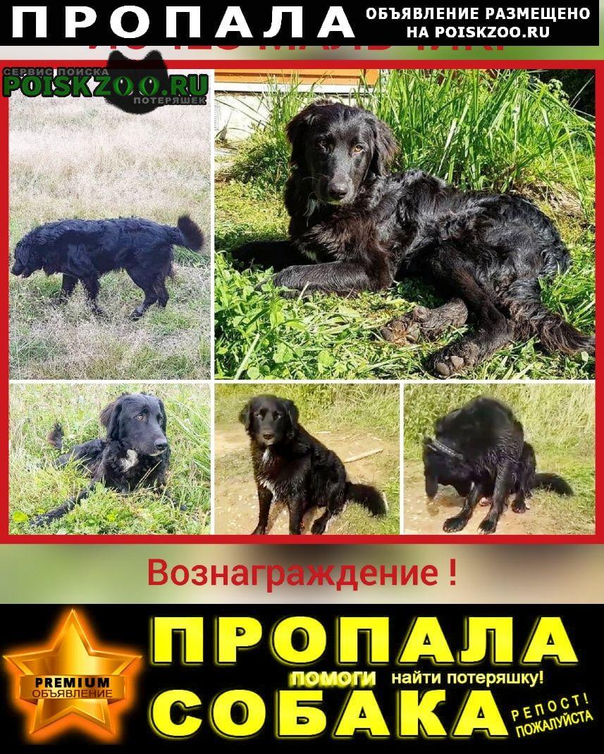 Дорохово Пропала собака кобель исчез пес мальчик, метис ч/б ретривера