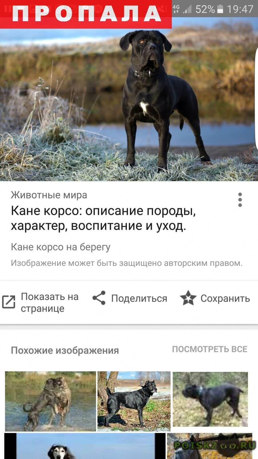 Пропала собака помогите пожалуйста найти собаку  г.Санкт-Петербург
