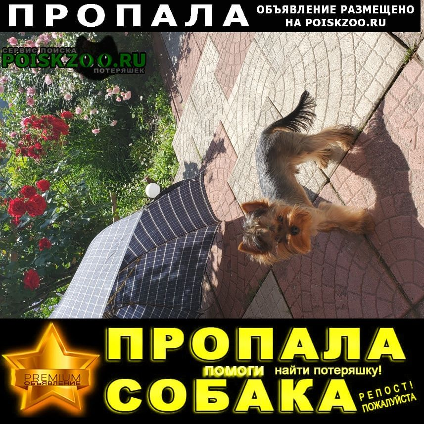 Пропала собака помогите пожалуйста найти собаку Видное