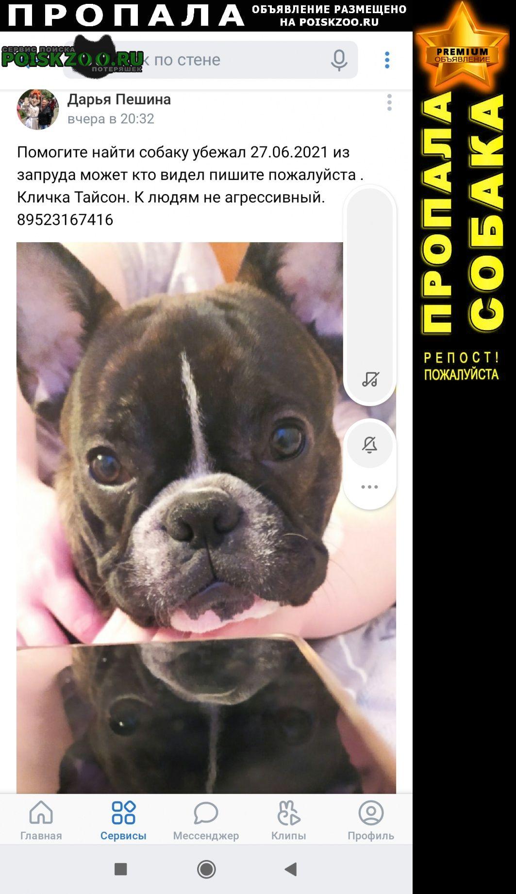 Пропала собака кобель Пермь