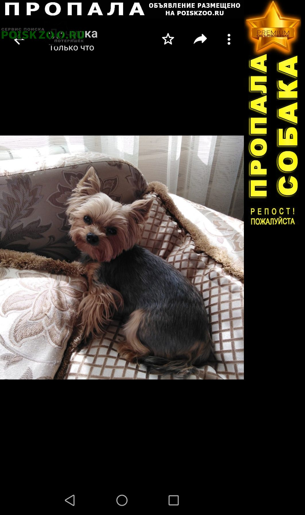 Пропала собака йоркширский терьер Тула