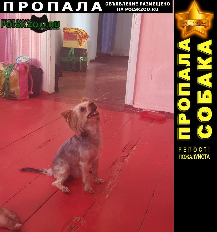Усть-Лабинск Пропала собака йоркширский терьер