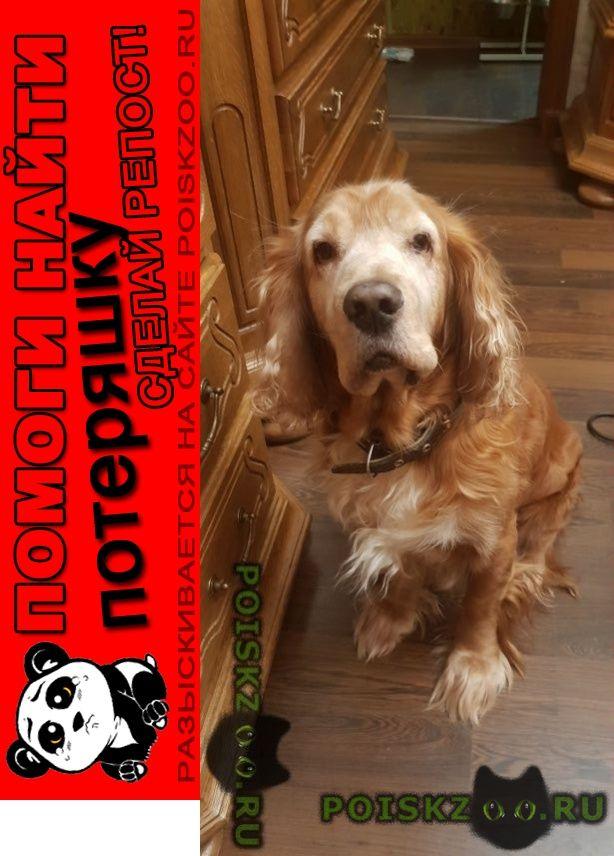 Пропала собака кобель г.Шахты