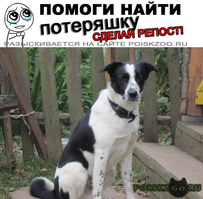Пропала собака кобель помогите найти друга г.Рязань