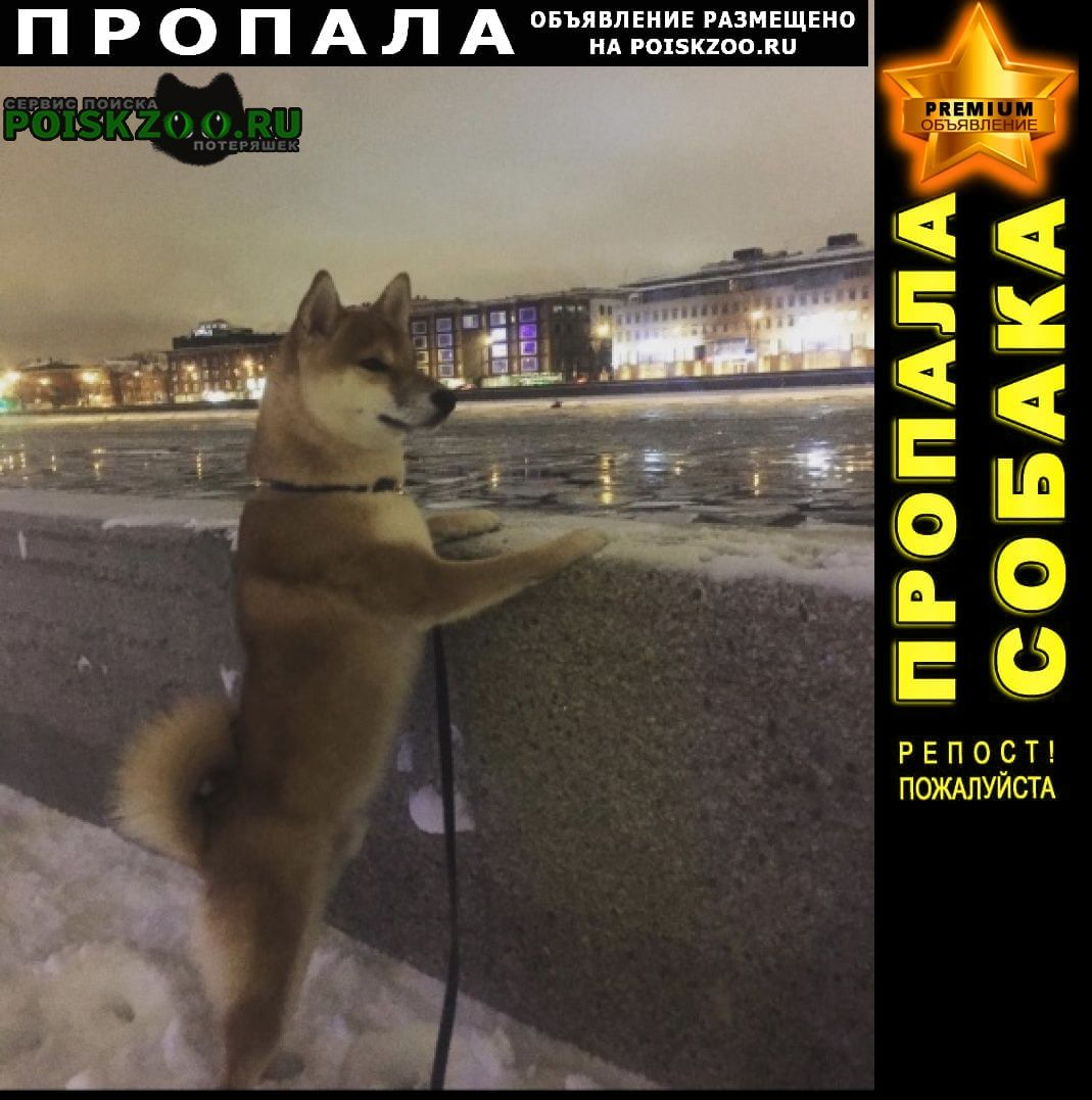 Пропала собака кобель Боровск