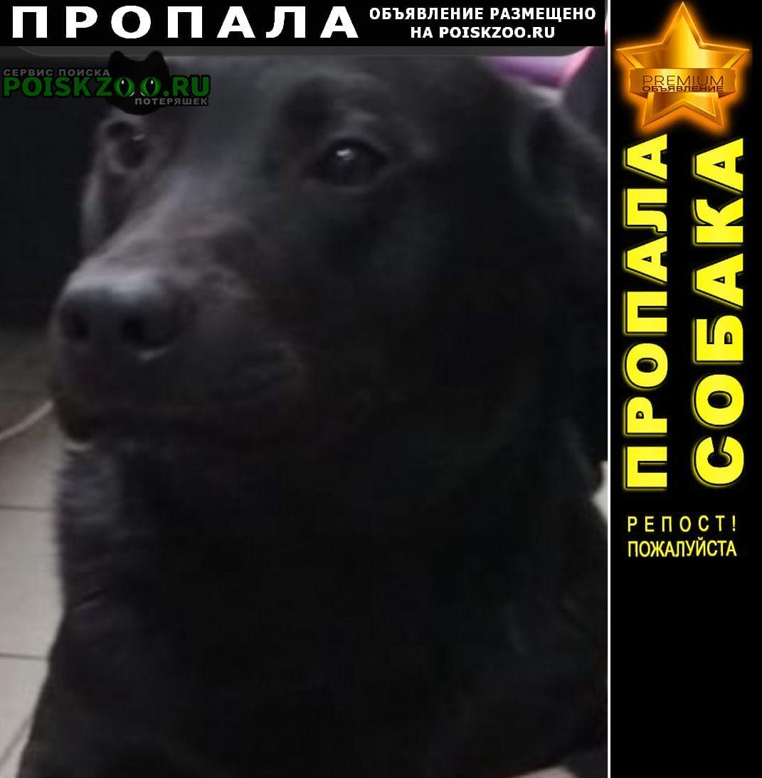 Пропала собака кобель метис лабрадора Воскресенск