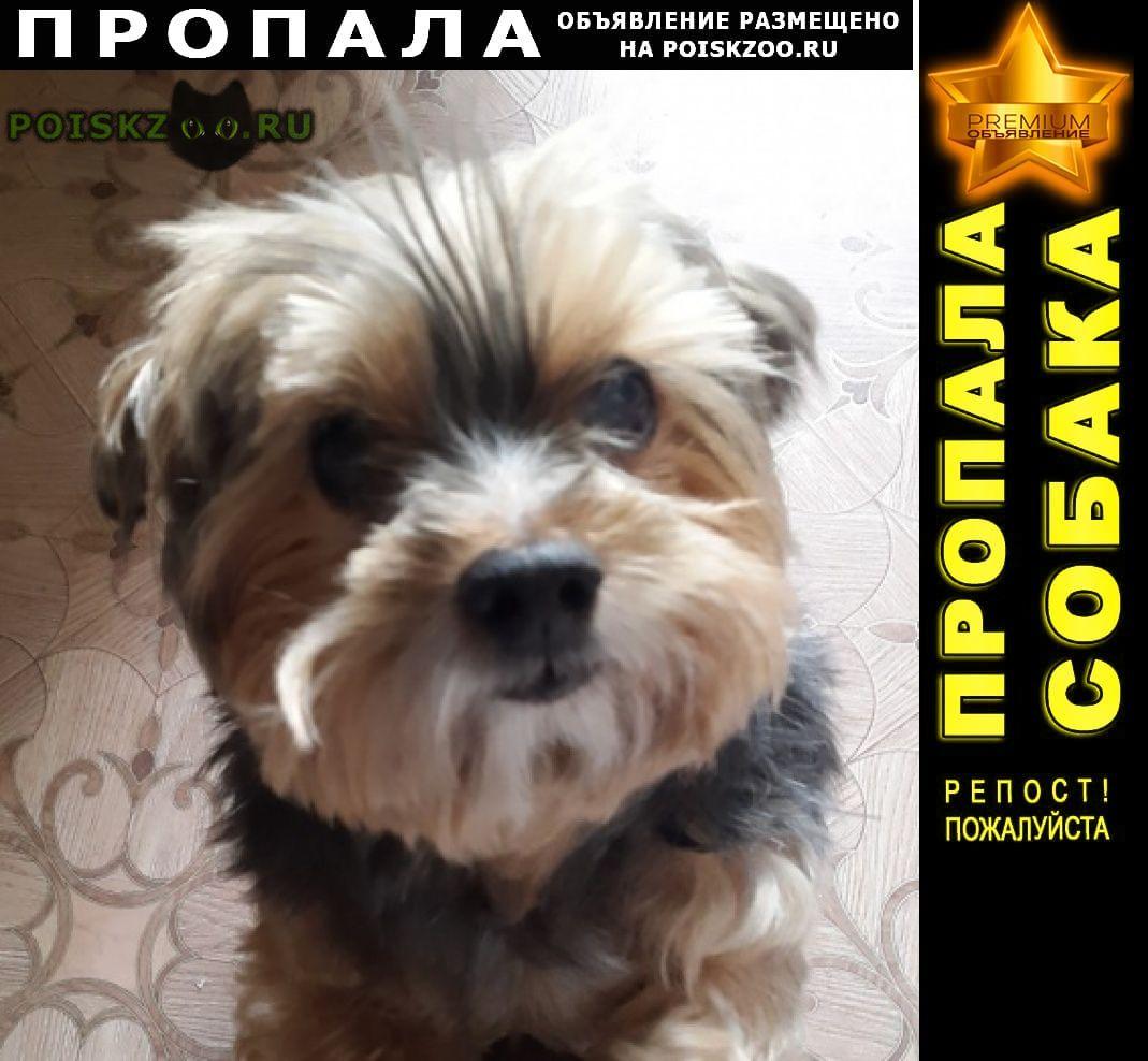 Пропала собака кобель украли собаку г.Санкт-Петербург
