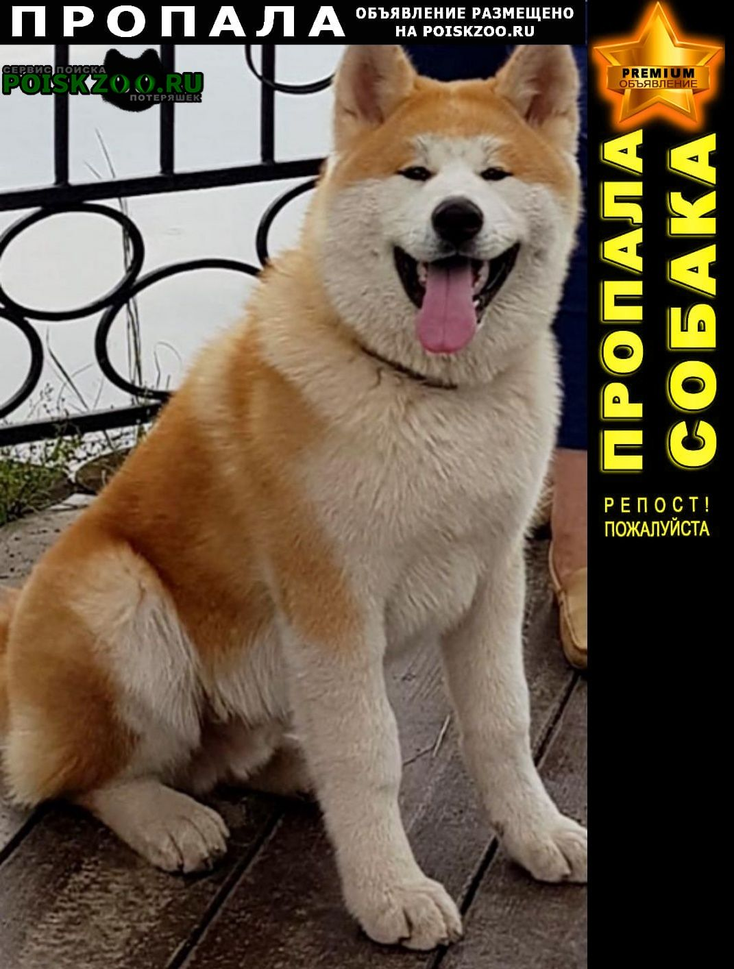 Пропала собака помогите вернуть питомца Красногорск